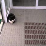 【寒くないニャ!】コンビニで暖まる招き猫!