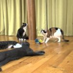 【怖いニャ!】雷に驚いて一斉に逃げる猫たち!