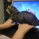【ここが心地良いニャ!】パソコンのキーボードの入力を邪魔する猫!