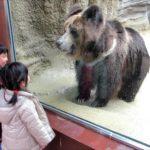 【神戸市立王子動物園】チベットヒグマが女の子とダンス!