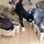 【箱の中が好きだニャ!】空き箱に猫たちが集まる!