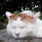 【何かいるニャ!?】バッタが頭の上に乗った猫!