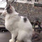 【にゃごやじょうだニャ!】名古屋城の猫!