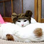 【ピッタリだニャ!】耳付き帽子をかぶった猫!