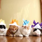 【かっこいいニャ!】折り紙の兜をかぶった猫!