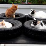 【ちょうどいいニャ!】スタッドレスタイヤの中でくつろぐ猫!