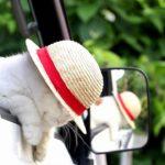【似合うニャ!】麦わら帽子をかぶった猫!