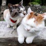 【何かいるニャ!】頭の上にカエルが乗った猫!