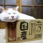 【国産大豆100%だニャ!】おかめ納豆の箱の中の猫!