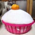 【猫に見えないニャ!】鏡餅のようになった猫!