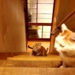 【上に何があるかニャ?】次々に階段をのぼって来る猫たち!