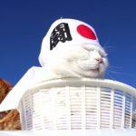 【元気ですニャー!アントニャオイニャオキ(アントニオ猪木)】闘魂ハチマキをした猫!