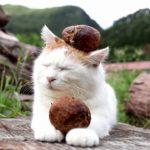 【良い香りだニャ!】松茸を持った猫!