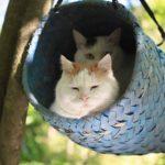 【快適だニャ!】森の中の青い篭の中の猫たち!