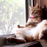 【外を眺めてるニャ!】窓辺でくつろぐ猫!
