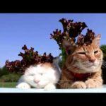 【レタスも似合うニャ!】頭の上にサニーレタスが乗った猫!