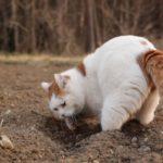 【何か見つかるかニャ?】穴掘りをする猫!