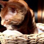 【ネコのシェアリングエコノミー(シェアエコノミー)!】かごをシェアする猫!共有型経済(シェアエコ)!