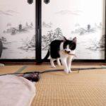 【取りに行くニャ!】おもちゃを拾ってくる猫!