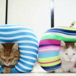【ツタンカーメンだニャ!】ネッククッションを楽しむ猫!