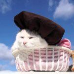 【ちょっとだけ賢そうだニャ!】ベレー帽をかぶった猫!