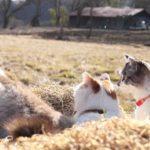 【最高の田舎暮らしだニャ!】ひなたぼっこをする猫!