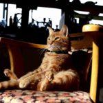 【ココがいいニャ!】椅子にお座りする猫!