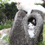 【居心地が良いニャ!】木の穴の中の猫!