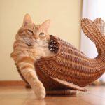 【猫魚だニャ!】クジラ風の猫!