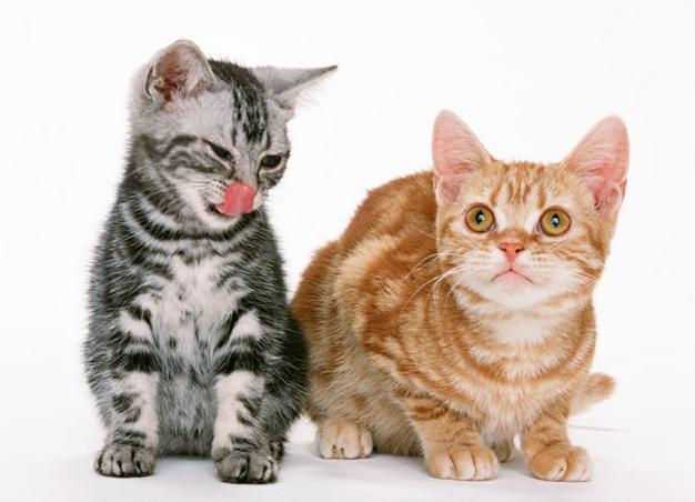 猫用トイレ・デオトイレ~口コミ・本体・サイズ・ワイド・シート・サンド・ケージ・フード付き・子猫・猫砂~